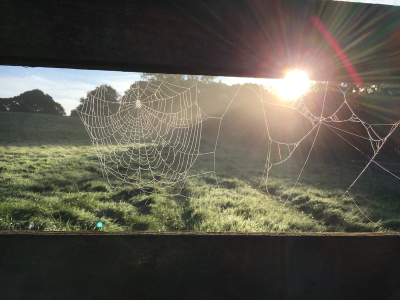 spider's web sunrise dawn